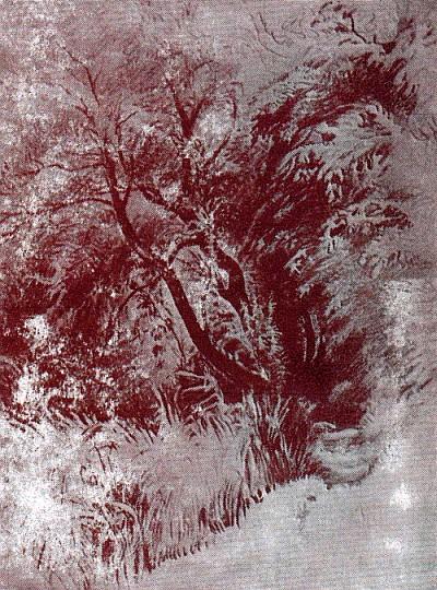 Kresba toušeňské přírody